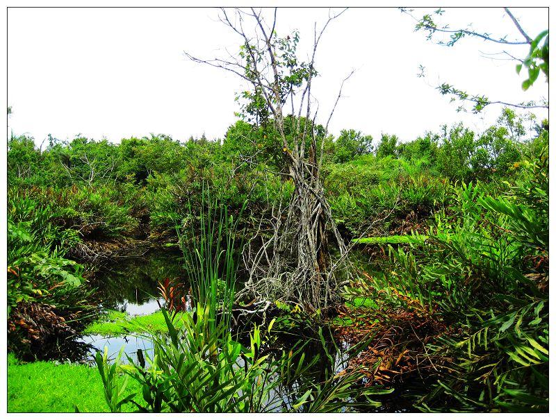 实拍非洲的热带雨林