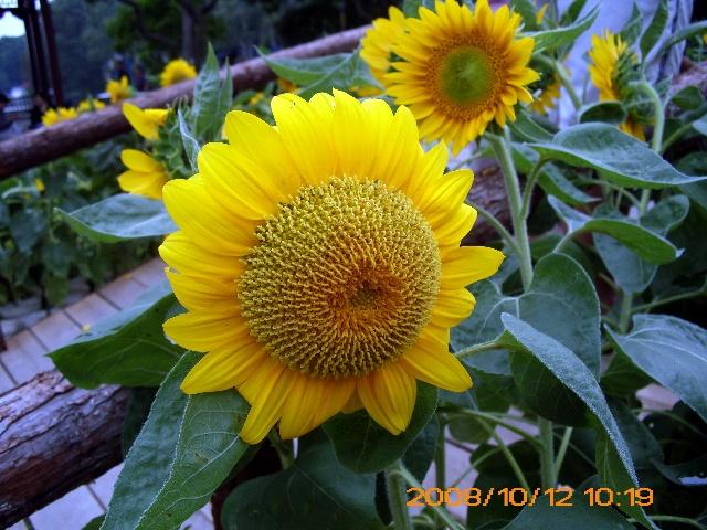 福州西湖公园 之花