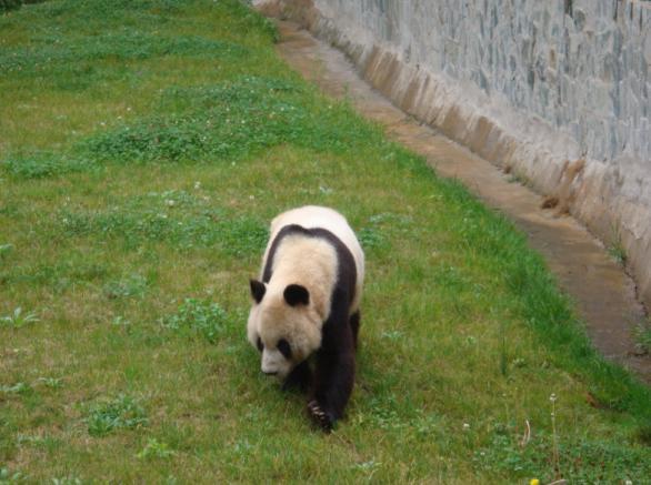 国庆游昆明野生动物园-夏天的萤火虫-搜狐博客