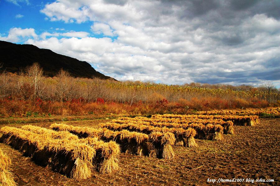 哈尔滨物语---秋天的颜色
