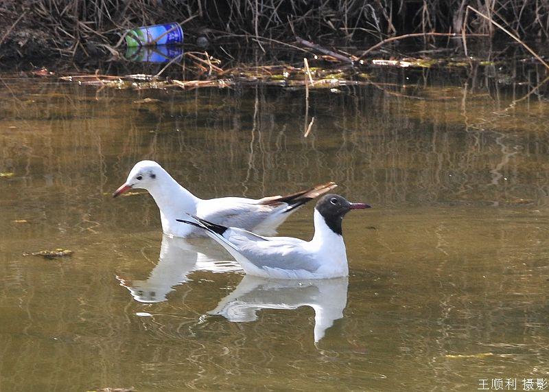 银川中山公园拍鸟-我的视觉生活-搜狐博客