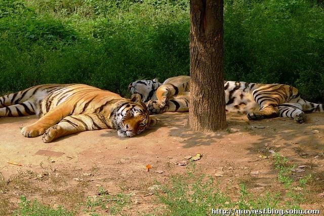 西安秦岭野生动物园掠影-秋叶随风-我的搜狐