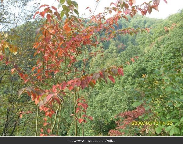 描写秋天的古诗和描写秋天的名句