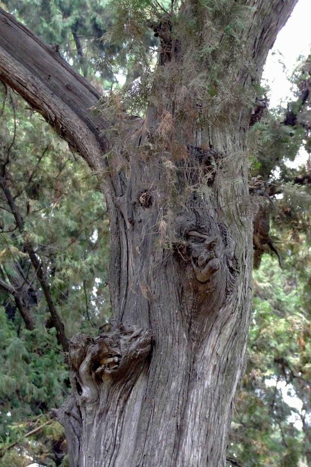 名贵 木材 树种 图片 介绍 伟 名贵 木材 树种 刘