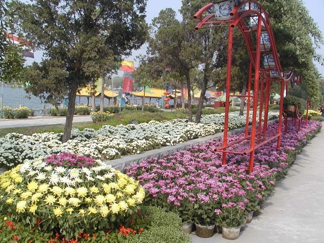 """盛装菊花城,静待游客来。秋日的开封,漫步在城内的大街小巷、楼台庭院,到处盛开着菊花,空气中迷漫着花香,整个城市被装扮成花团锦簇、灿若云霞的花的世界。酷爱菊花的开封人,在种菊、赏菊、品菊的同时,还画菊、咏菊,将菊文化演绎得淋漓尽致。开封人民喜爱菊花,就其深度而言,已远远超出了""""赏菊""""的特定含义。以菊花展示千年古城深厚的文化底蕴,以菊花的清雅高洁展露今人的风采,以菊花为媒结交四海宾朋,才是古都人爱菊的真谛所在。"""