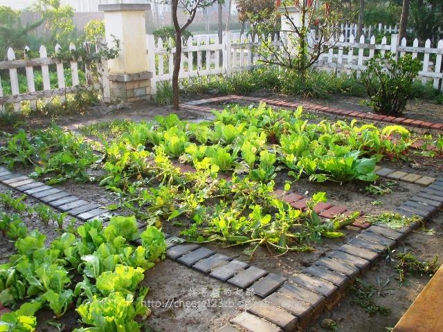 天台菜园设计效果图天台花园设计效果图楼顶天台