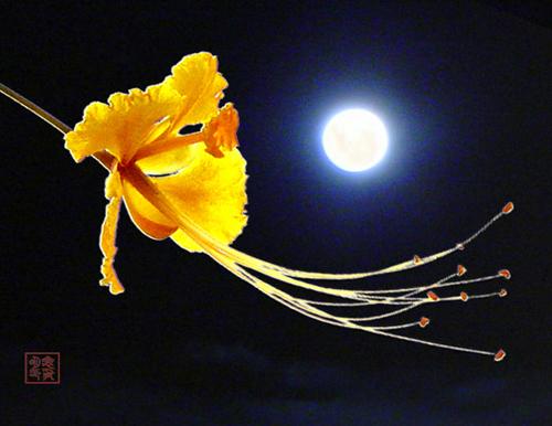 我们一起看月亮爬上来