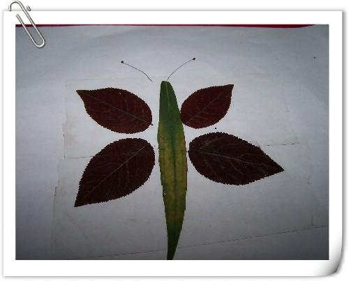 树叶粘贴画的制作