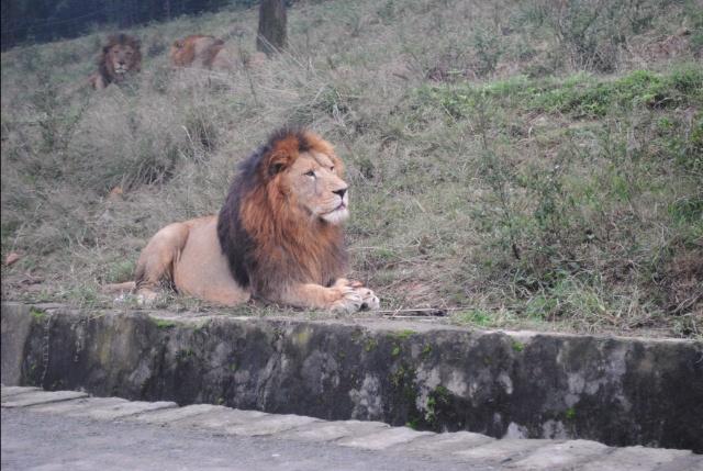 重庆永川野生动物园自驾游