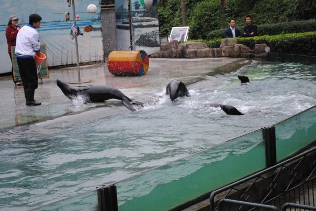 与兽为伍,重庆永川野生动物园自驾游