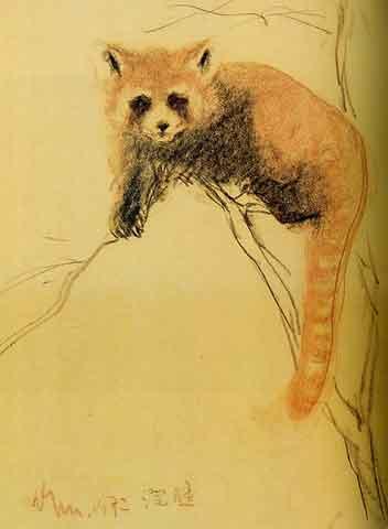 素描可爱小浣熊