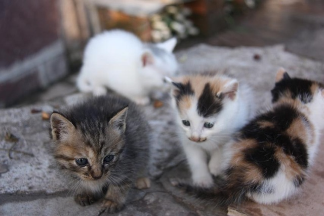 农家院里的一窝刚出生的小猫-十一前自驾游 打个时间差 一图片