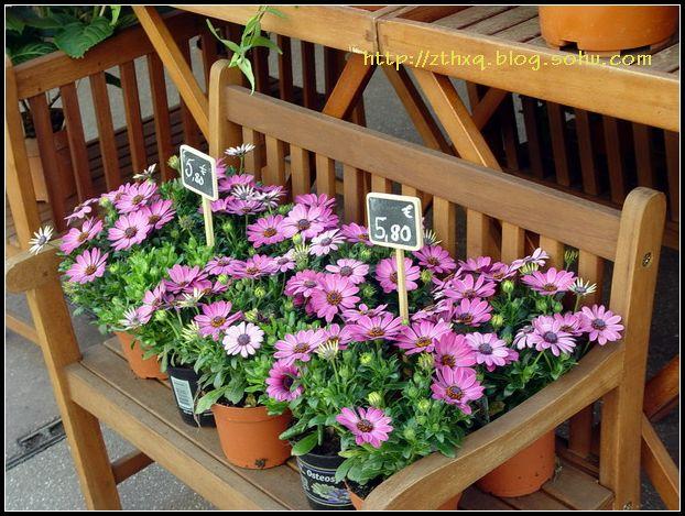 小镇的花和花店