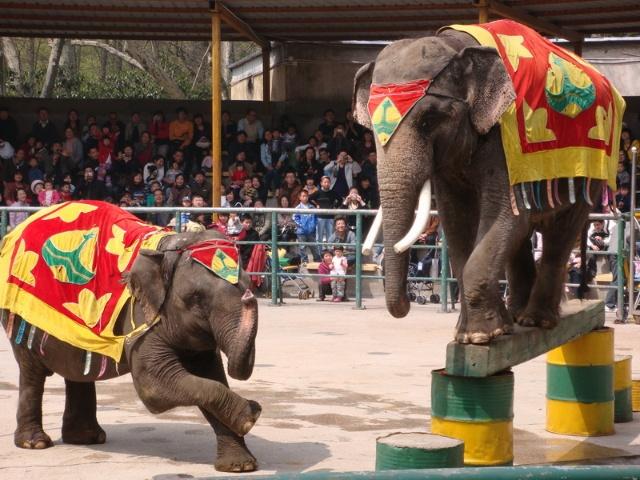 动物园里的大象表演吸引了很多游客-奥奥生日纪实之六 奥奥和菲菲的图片