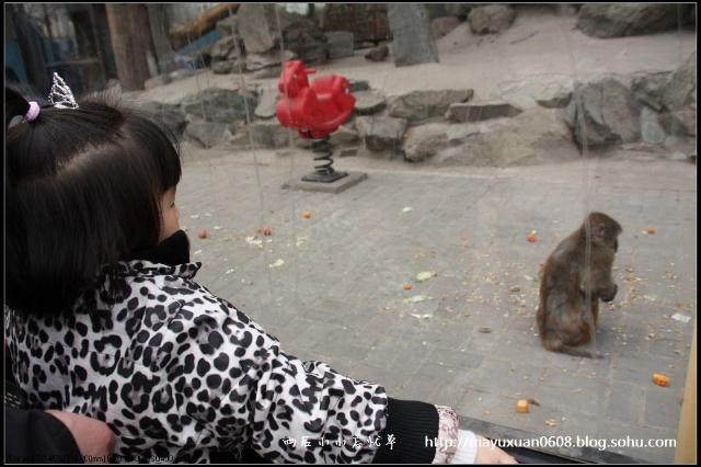 快乐的动物园之行