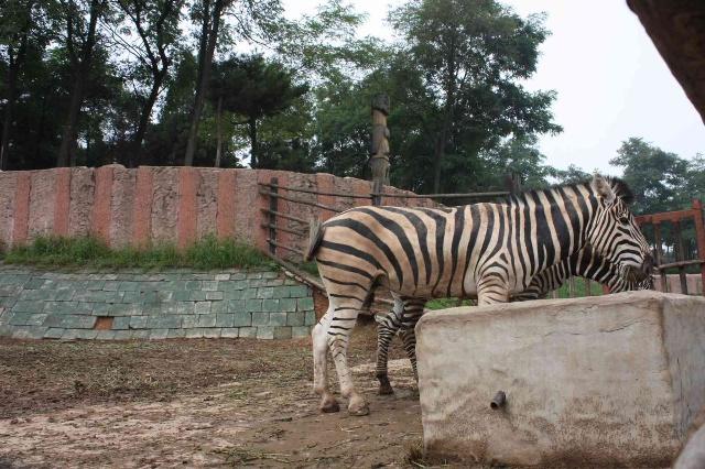 野生动物园-小贝的快乐编织窝-搜狐博客
