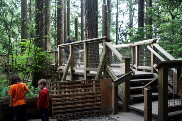 米处的一棵棵大树上,搭起空中栈道,让游客们在高空树梢间立体地观察加